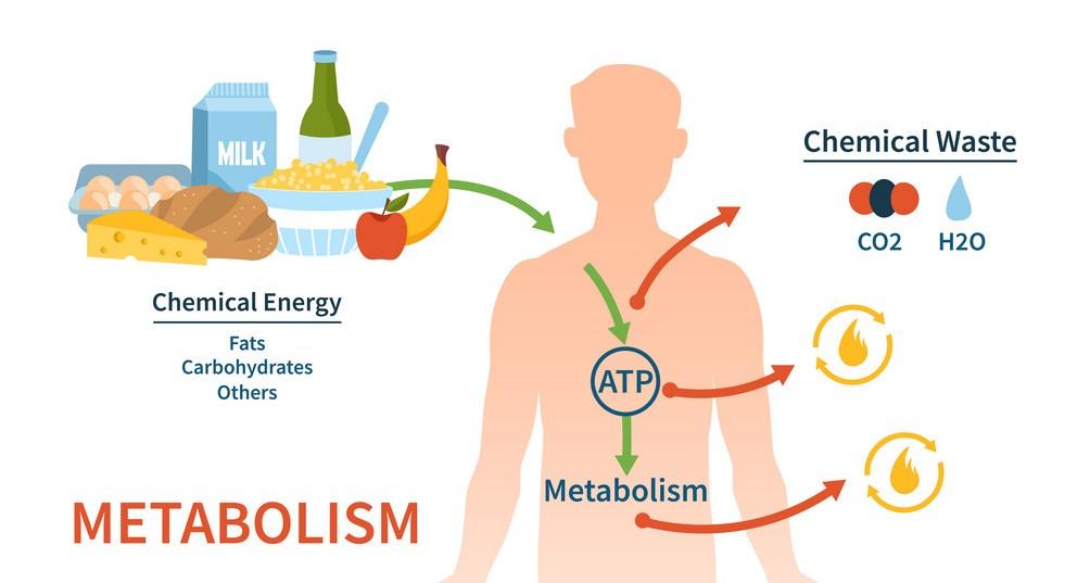 Change in metabolism - metabolism process