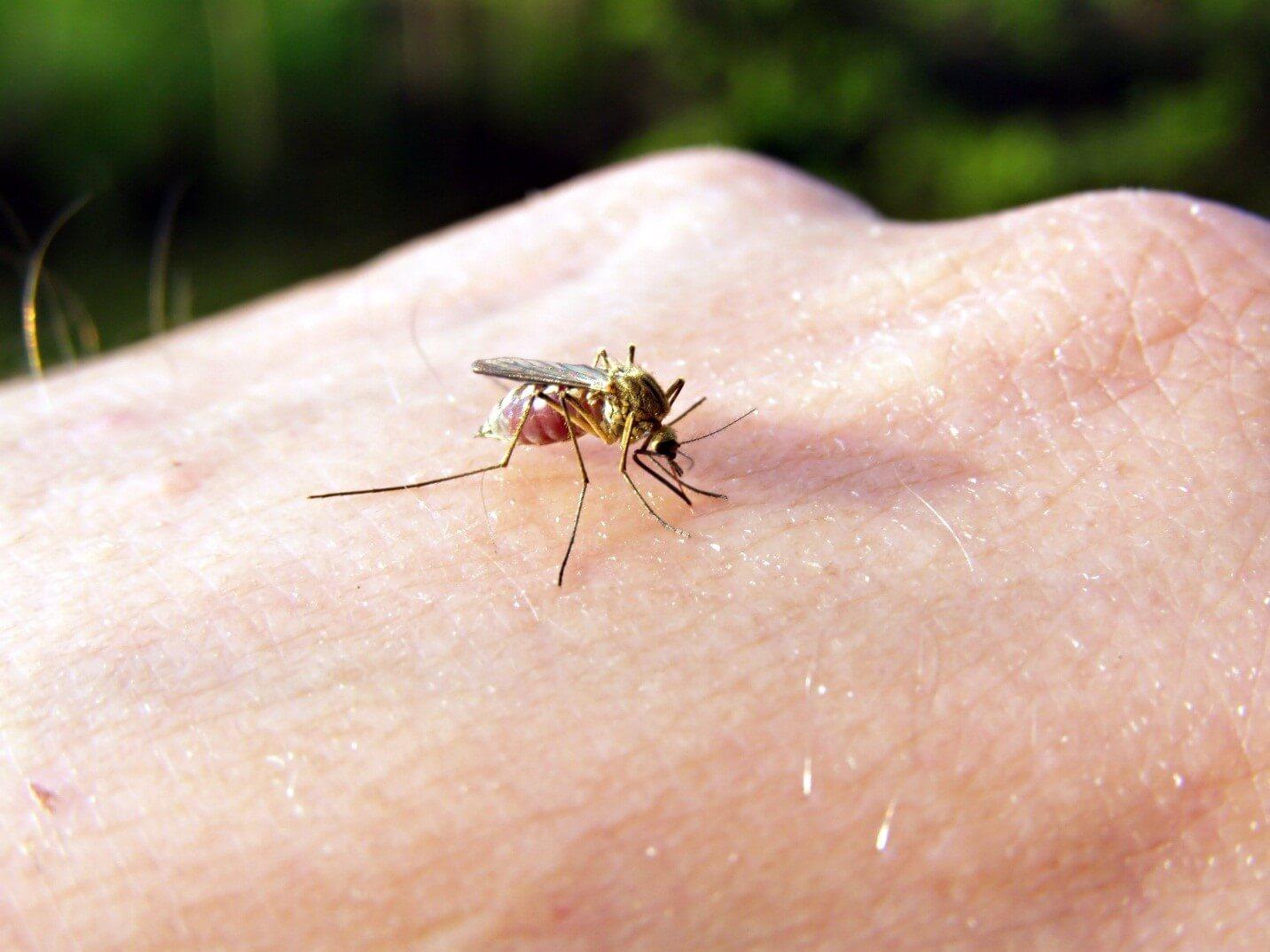 Chigger Bites Vs Bed Bug Bites
